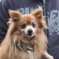 Found dog on 27 Nov 2015 in Ronanstown , Clondalkin. found, now in the dublin dog pound... Date Found: Thursday, November 26, 2015 Location Found: Ronanstown , Clondalkin