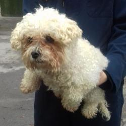 Found dog on 27 Oct 2017 in Whitehall Road , Terenure... found, now in the dublin dog pound... Date Found: Thursday, October 26, 2017 Location Found: Whitehall Road , Terenure