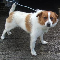 Found dog on 28 Apr 2016 in School Kilinarden , Tallaght. found,now in the dublin dog pound.. Date Found: Wednesday, April 27, 2016 Location Found: School Kilinarden , Tallaght