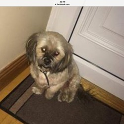 Found dog on 28 Feb 2016 in Clarehall , Dublin. Found Clarehall, malahide road. Update excaped Finder, hopefully found his way home