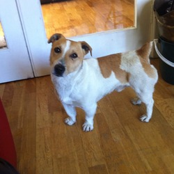 Found dog on 28 May 2014 in meath. Found dog - Wotton area/Sutton Lane Co. Meath. Very friendly male jack Russell with no collar. Contact Ciara on 086 8685771 please help me reunite him with his owners!