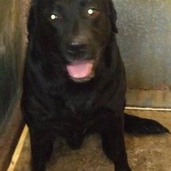 Found dog on 28 Nov 2016 in Bolbrook Tallaght , Tallaght . found, now in the dublin dog pound.. Date Found: Friday, November 25, 2016 Location Found: Bolbrook Tallaght , Tallaght