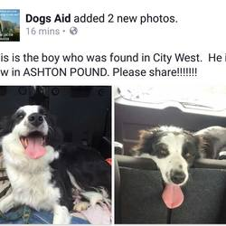 Found dog on 29 Apr 2016 in city west. found, in city west, now in the dublin dog pound..