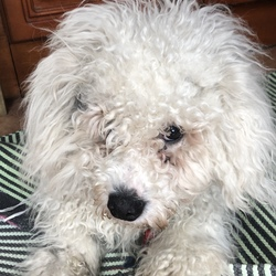 Reunited dog 29 Apr 2018 in Sandyford. Rico has been found!!