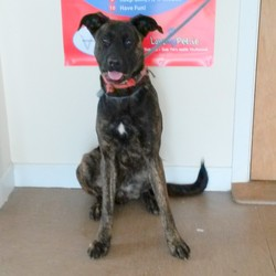 Found dog on 29 Aug 2014 in Co Wicklow. Found in Ashford, Co Wicklow. Contact Wicklow Dog Pound for information on 040444873. Rehoming from 5-9-14 if owner does not come forward
