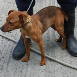Found dog on 29 Aug 2014 in DUBLIN. FOUND  Date Found: Thursday, August 28, 2014 Location Found: Fernwood Springfield , Tallaght NOW IN DUBLIN DOG POUND
