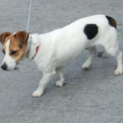 Found dog on 29 Aug 2016 in Palmerstown , Village. found, now in the dublin dog pound.. Date Found: Friday, August 26, 2016 Location Found: Palmerstown , Village