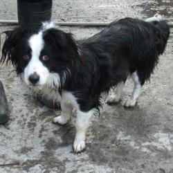 Found dog on 29 Jan 2015 in tallaght. found collie now in the dublin dog pound... Date Found: Wednesday, January 28, 2015 Location Found: Firhouse Road , Tallaght