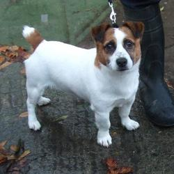 Found dog on 29 Oct 2014 in lucan. found jrt now in dublin dog pound.. Date Found: