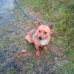 Found dog on 29 Oct 2014 in trim. found, now in the care of last hope charity...found trim