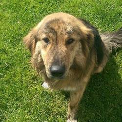 Found dog on 30 Apr 2015 in Drumbarragh Kells. found female 2yr old Collie X. ref 208..found in Drumbarragh Kells....contact Meath pound on 087 0676766