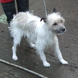 Found dog on 30 Jan 2015 in tallaght. found terrier, now in the dublin dog pound... Date Found: Thursday, January 29, 2015 Location Found: Main Street , Tallaght