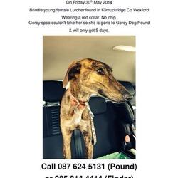 Found dog on 30 May 2014 in Kilmuckridge Co Wexford. Young female brindle lurcher found