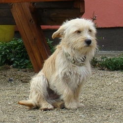 Found dog on 30 May 2015 in Leitrim. About 10 months old male, Westhighland Cross - we picked him up from a market. He is microchipped but with no address. Vet thinks he may was stolen. Please contact, providing his chip number, if you think he was yours. Only matching chip number will be considered proof.