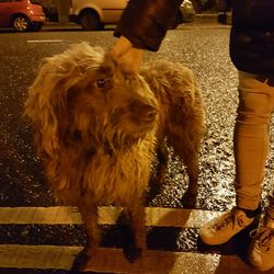 Found dog on 31 Jan 2017 in Rathmines. Dog in Rathmines, contact 0876149912