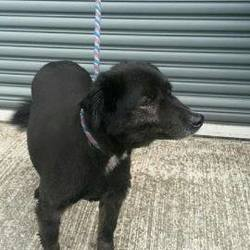 Found dog on 31 Mar 2015 in duleek. found Terrier x female...found in Ryans park Duleek...please contact Meath pound