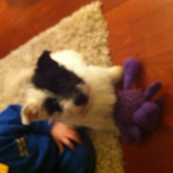 Lost dog on 01 Apr 2013 in Dublin/ greenhills. Layla is a mixed breed jack Russell/ bichon freis she is all white with half a black face 0851238838