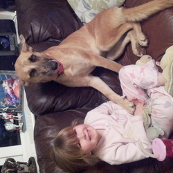 Lost dog on 01 Dec 2012 in moneygall..co.offaly. Large blonde 2yr old  greyhound x bitch..black around eyes.black and brindle muzzle.wearing a red collar