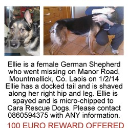 Lost dog on 01 Feb 2014 in Manor Road, Mountmellick, Co. Laois. Ellie is a timid but friendly 2 yr old german shepherd with a docked tail, missing from the Derrycloney / Manor Road area of Mountmellick, Co.Laois. Ellie has been missing since 6pm 1/2/14, she got spooked and bolted. Ellie is very recogniseable as she has almost no tail and is shaved along her right leg and hip. Please contact 0860594375 if you have ANY information.