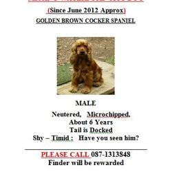 Lost dog on 01 Jun 2012 in waterford city. MISSING WATERFORD CITY DOG