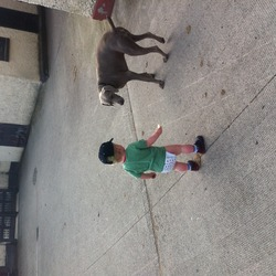 Lost dog on 01 Mar 2013 in Eadestown, punchestown, kildare. Wiemeraner dog, called Jack.  Silver grey six years old