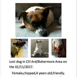 Lost dog on 01 Nov 2017 in GALWAY Bohermore. SHE IS BACK HOME