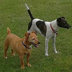 Lost dog on 01 Oct 2017 in roscommon. two little dogs lost/stolen roscommon area