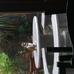 Lost dog on 01 Sep 2015 in swords.