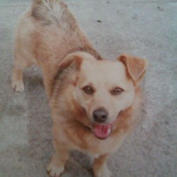 Lost dog on 02 May 2013 in Urlingford, kilkenny. Tiny is missing since Thursday 02/05/2013.  email mlobrien3@gmail.com