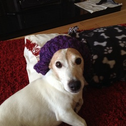 Lost dog on 02 Sep 2015 in Bunclody town Wexford . Toby a 10 year old jack Russell terrier. Microchipped has a prominent bone that sticks out one side of rib cage . Much loved pet missing from Ryland wood Bunclody wexford