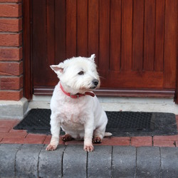 Lost dog on 03 Aug 2015 in Roseberry, Newbridge, Co. Kildare. 