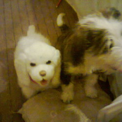 Lost dog on 03 Dec 2012 in mulhudard blanchardstown 15. Gracie