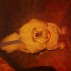 Lost dog on 03 Feb 2014 in dublin 7. Hi my dog of ten year has gone missing from the Wolf tone quay, Smithfield area. On Mon, feb 3rd around 3.30pm.  He is a bigger than normal shih tzu. Normaly very freindly.