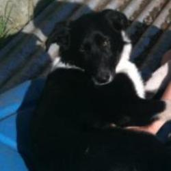 Found dog on 03 Jun 2012 in Crumlin Kimmage area.
