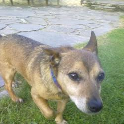 Lost dog on 15 Oct 2011 in Bray/ Enniskerry. Still missing. Children very upset  Reward offered!