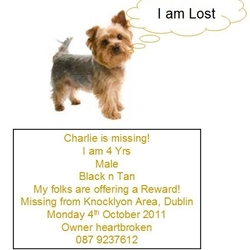 Lost dog on 03 Oct 2011 in Knocklyon Dublin . Male Yorkshire Terrier 