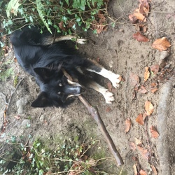 Lost dog on 04 Mar 2017 in South Dublin. FOUND
