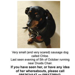 Lost dog on 04 Oct 2013 in Killiney. Mini Dachsund lost in Killiney yesterday evening. Please call 0877659890 or 0862624147