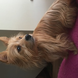 Lost dog on 05 Dec 2016 in Stoneybatter. Peanut is missing. She is a blonde long haired terrier. Missing from Stoneybatter in Dublin 7 since this morning. If you've seen her please phone 0831058958