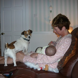 Lost dog on 05 Jul 2012 in Foxford Mayo. This is our jack russell his name is Nipper .. missing from Foxford Mayo area since noon today. Family pet. 086/3036000