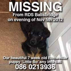 Lost dog on 05 Nov 2012 in Ballsbridge. Missing since 5pm 5th Nov from the RDs in Ballsbridge, Bo the 8 week old Rottweiler puppy, dearl loved and missed by the heartbroken little girls, reward offered, 0860213936