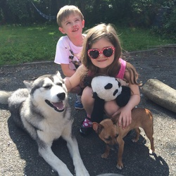Lost dog on 05 Sep 2014 in Naas , Co Kildare. Jake is a Siberian husky with brown eyes. He slipped his collar on thurs eve has been spotted on Friday morning in IDA business park. He is very soft natured and great with children. He has a deficiency which needs to be managed daily and he's now missing 3 days. Please help bring him home to his family. Contact Niamh on 0871957290