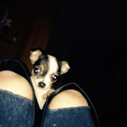 Lost dog on 05 Sep 2015 in Jobstown Tallaght . Small Chihuahua 1-2Yrs She's Apart Of This Family My Nephews Puppy He's Only 19Months Old He's Crying All Night Over The Puppy Please AnyOne See Her Big Reward Given Puppy Means A Lot To Us Taken In Cloonmore In Jobstown 5September 