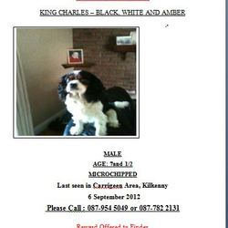 Lost dog on 06 Oct 2012 in carrigeen, killkenny. MISSING /STOLEN DOG