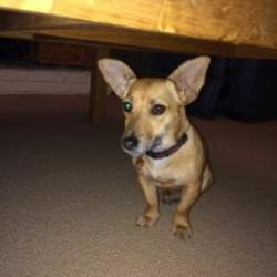 Lost dog on 06 Oct 2014 in kildare. Dog lost in Kilcullen Co.Kildare area. Light reddy brown 1 year old Jack Russell, name Pippa, has a name tag. Call 0866619413