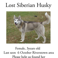 Lost dog on 06 Oct 2014 in Tramore. Lost dog in Tramore, Please help me find her