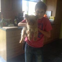 Lost dog on 06 Sep 2013 in Navan. York terrier, found in Navan - 2013-09-06