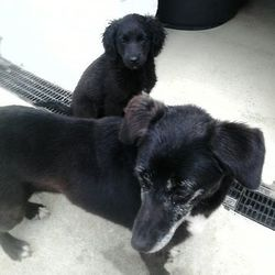 Lost dog on 07 Jul 2015 in meath...... found...this poor mum & pup were dumped over a wall this morning..ref 311 & 312..mum is only Westie size & the little baby is tiny (about 8wks old)..contact Meath pound on 087 0676766