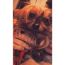 Lost dog on 07 Mar 2016 in jobstowm. lost small dog in jobstown area pl call 0851395731