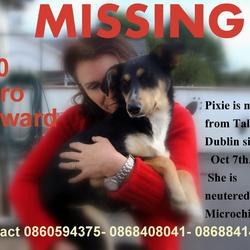 Lost dog on 07 Oct 2012 in Dublin. Pixie, is 6mths old. She went missing from the Tallaght area on 7th Oct. She is spayed & micro-chipped.